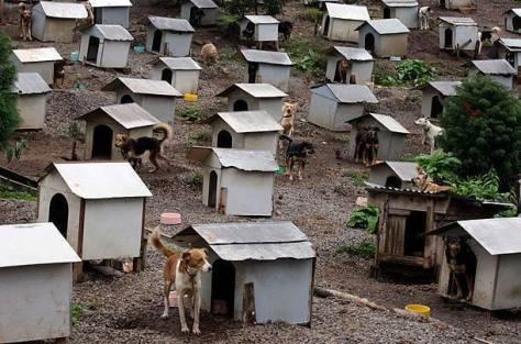 ¿Refugio o Campo de Concentración?